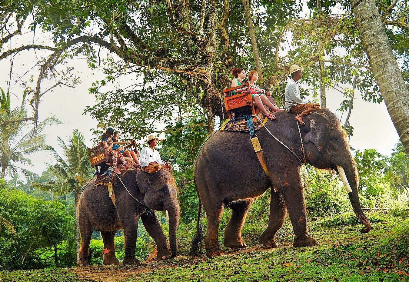 Balade elephant bali