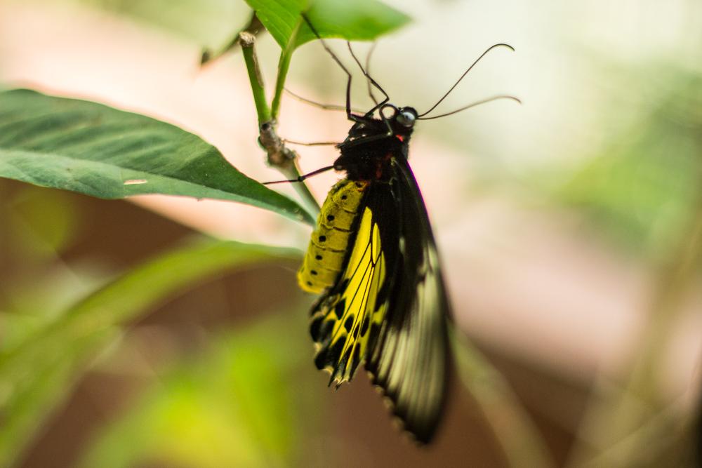 Parc papillons