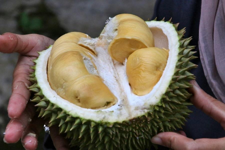 Durian 1493310 1280 min