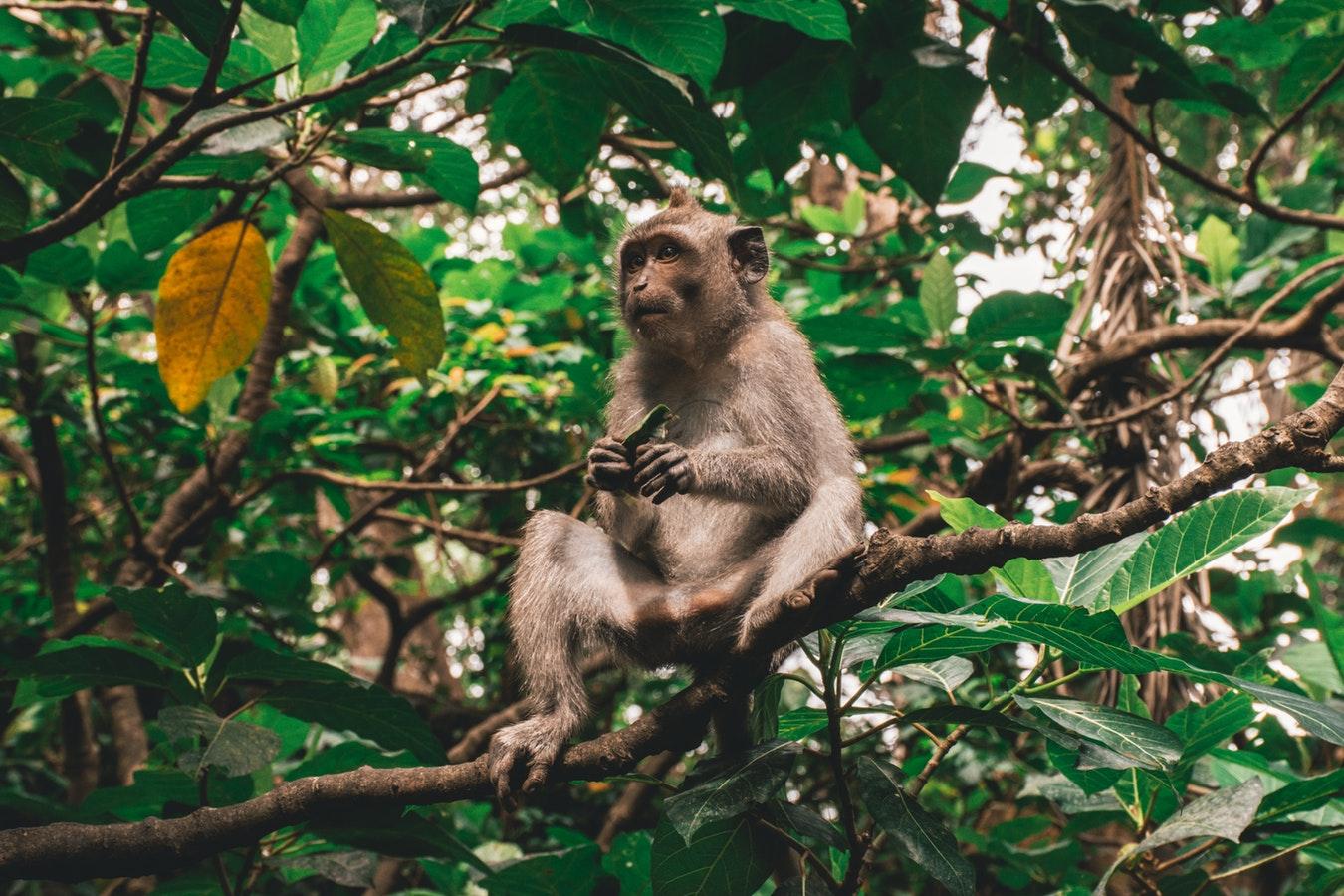 Foret des singes d'Ubud