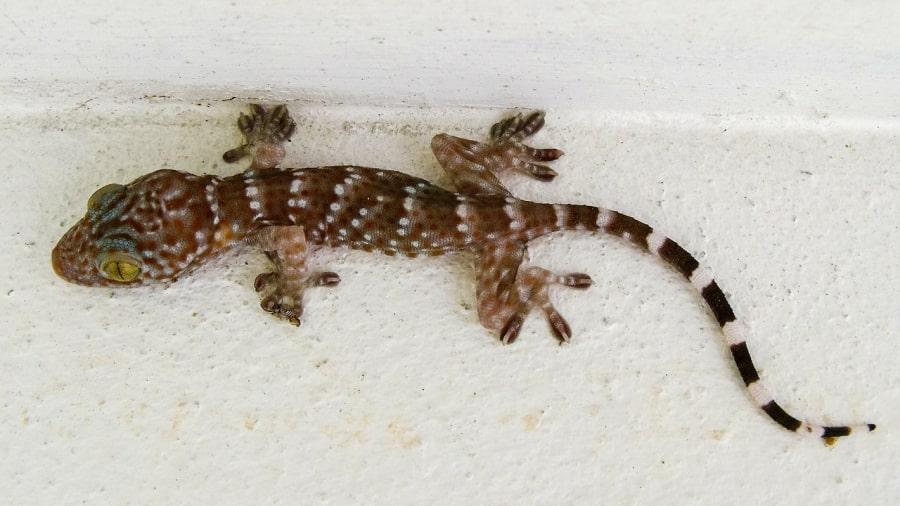 Gecko 200959 1280 min 1