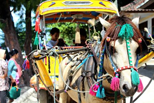 Gili trawangan horse