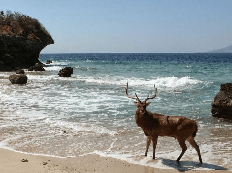 Menjangan : l'ile aux cerfs