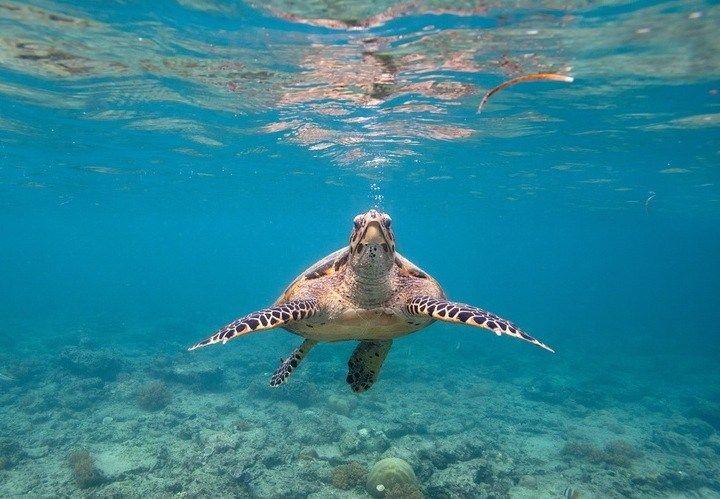Ile Gili et son snorkeling