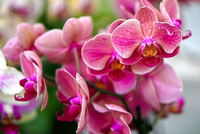 Orchids 4468051 640