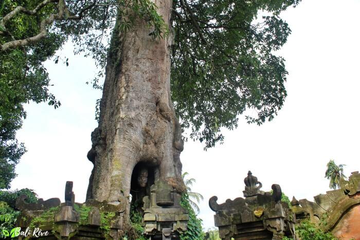 Sangeh forest