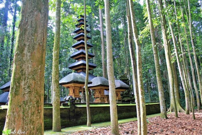 Sangeh forest2