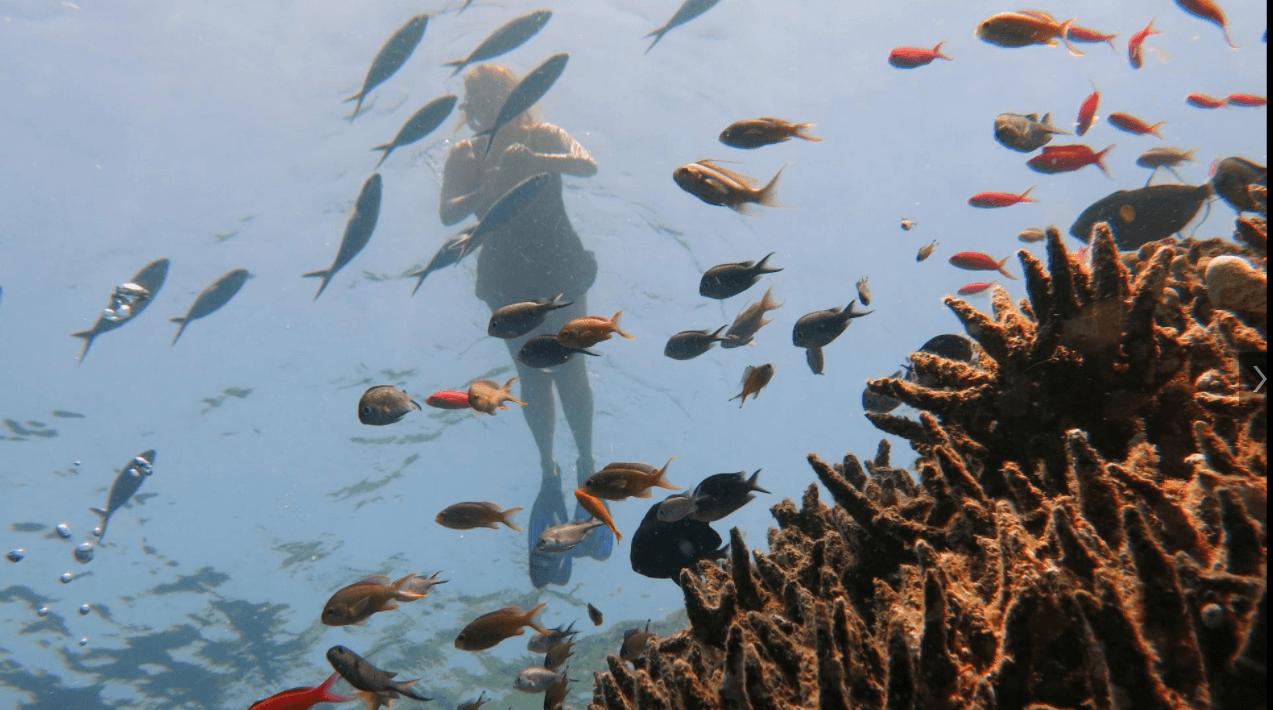 Snorkeling à Menjangan