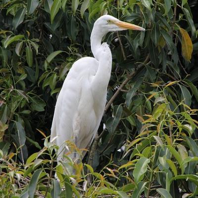 White crane 1197138 640